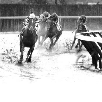 Seattle Slew in action at Aquaduct in 1978